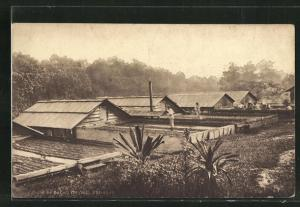 AK Trinidad, Cacao drying