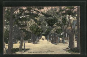 AK Hamilton, Cedar Avenue