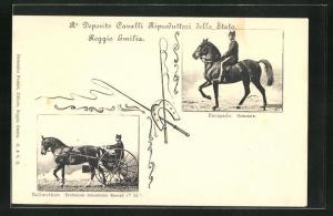 AK Reggio Emilia, Bellwether, Trottatore Americano Record, Escapade, Orientale
