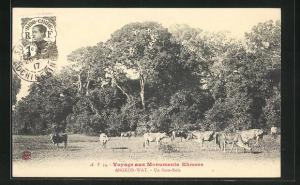 AK Angkor-Wat, Un Sous-Bois