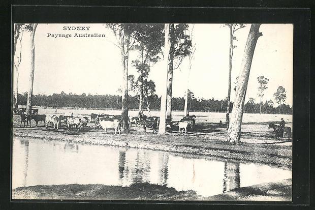 AK Sydney, Paysage Australien, Rinderfarm 0