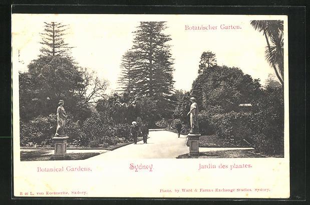 AK Sydney, Botanischer Garten 0