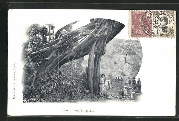 AK Laos, Dans la brousse, mächte Baumwurzel 0