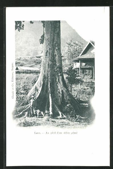 AK Laos, Au pied d`un arbre géant 0