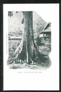 AK Laos, Au pied d`un arbre géant
