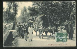 AK Colombo, Road to Mount Lavinia, Ochsengespann