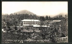 AK Ceylon, A general view of tea estate showing factory