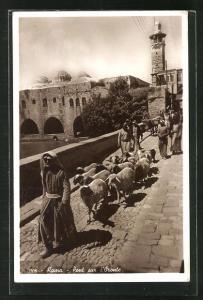 AK Hama, Pont sur l`Oronte