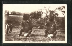 AK Broncho Bill`s Performing Elephants, Elefanten machen Zirkus-Kunststücke unter freiem Himmel