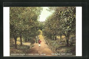 Künstler-AK Magila, the Orange Grove