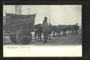 AK St. Miguel-Acores, carro de boi