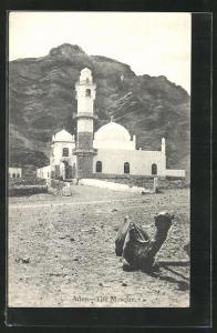 AK Aden, The Mosque, Camel