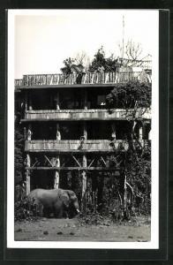 AK Nyeri, Elefant vor einem Haus