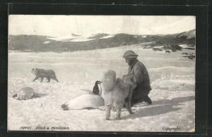 AK Joyce Südpol-Expedition, Joyce mit Hunden auf Pinguin-Jagd
