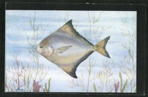 Künstler-AK Fisch, Madras Fish, the Common Pomfret