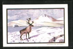 AK Island, Ein Hirschbulle auf einer verschneiten Ebene