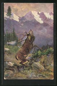 Künstler-AK Hirsch breim Brüllen im Gebirge, Einladung zur Jagd