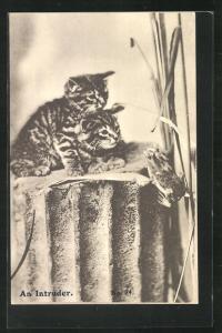 AK zwei niedliche Katzenbabies beobachten eine Frosch