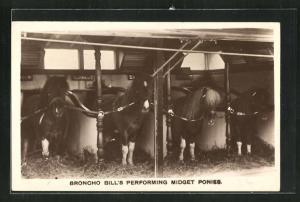 AK Broncho Bill`s Performing Midget Ponies, Zirkus-Ponies