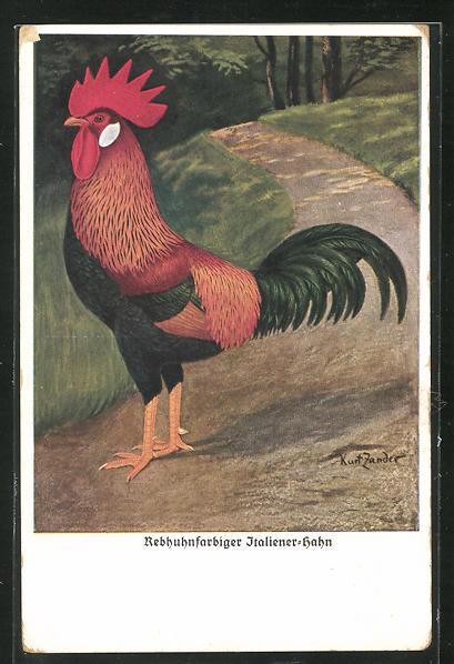 Künstler-AK Kurt Zander: Rebhuhnfarbiger Italiener-Hahn, Geflügel 0