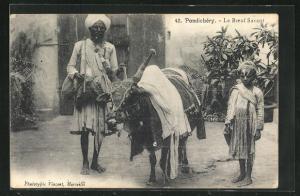 AK Pondichéry, Le Boeuf Savant