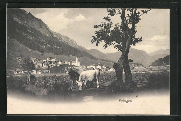 AK Splügen, Panorama mit Rindern 0