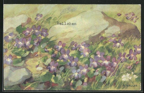 Künstler-AK Anna Haller: Wiese mit Veilchen 0