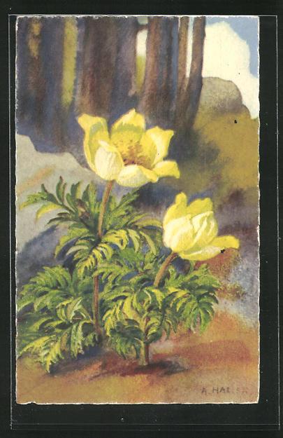 Künstler-AK Anna Haller: Blumen mit gelber Blüte 0