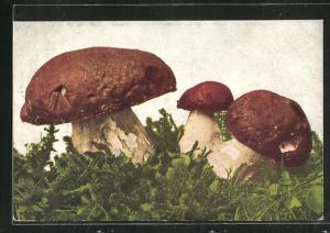 AK Pilze auf einer Wiese