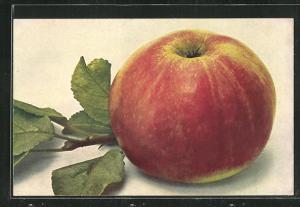 AK Apfel Kaiser Alexander mit Blattwerk