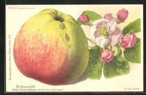Lithographie Boikenapfel mit Blattwerk