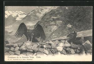 AK Chile, Condores en la Guardia Vieja, Kondore im Gebirge