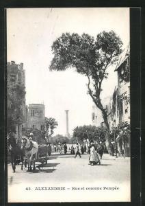 AK Alexandrie, Rue et Colonne Pompée