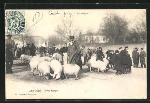 AK Limoges, Schweineherde auf Platz