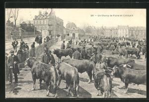 AK Limoges, Un Champ de Foire, Rinder auf umzäumten Platz