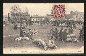 AK Moulins, Le Plan des Bouchers, Schweine auf Platz