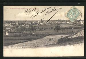 AK St-Denis-d`Anjou, Vue des Vignes