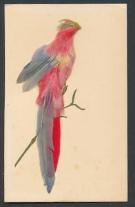 AK Papagei aus echten Federn auf einem Ast
