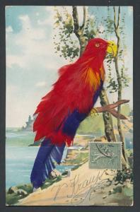 AK Rot-blauer Papagei aus echten Federn