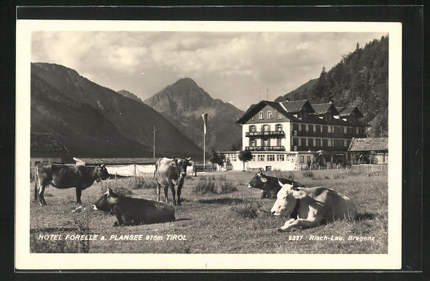 AK Plansee, Hotel Forelle mit Kuhweide 0