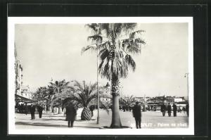 AK Split, Palme na obali