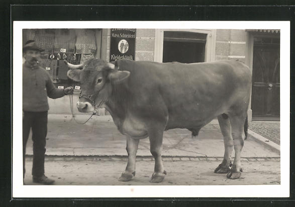 Foto-AK Kuh vor Emailleschild Mass. Schmeiderei - Kleiderklinik 0