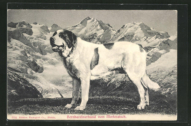 AK Berhardinerhund vom Morteratsch 0