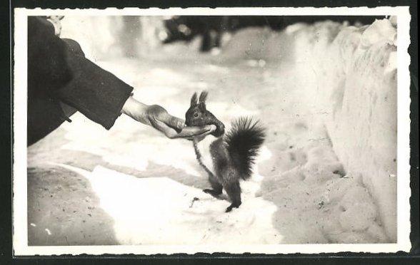 Foto-AK Arosa, Waldfreuden, Eichhörnchen wird von Hand gefüttert 0