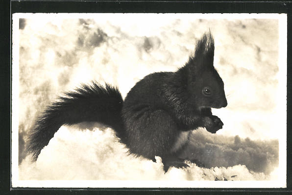 AK Eichhörnchen, Ein Freund der Gäste 0