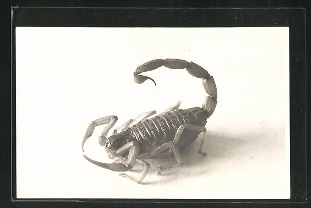AK Skorpion in Ruhestellung 0