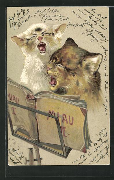 Präge-AK Katzen stimmen einen Gesang an 0
