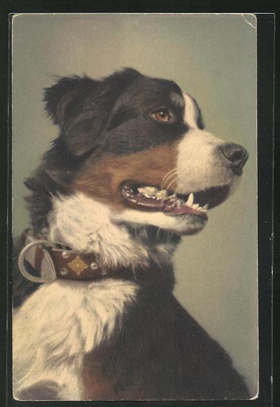AK Hund mit gutmütigem Blick 0