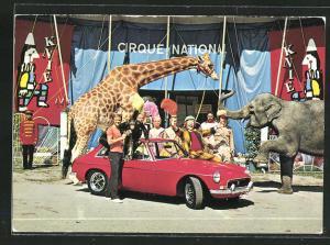 AK Knie, Nationalzirkus der Schweiz, Schimpanse im Auto, Giraffe und Elefant