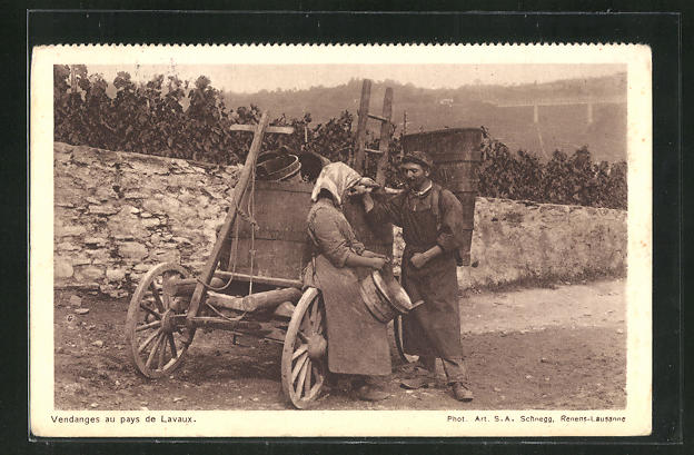 AK Vendanges au pays de Lavaux, Weinlese 0